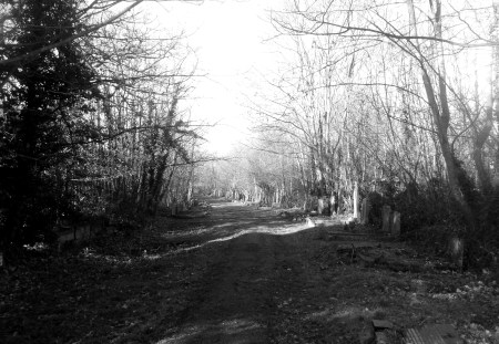blach-and-white photo of road through wooded cemetery