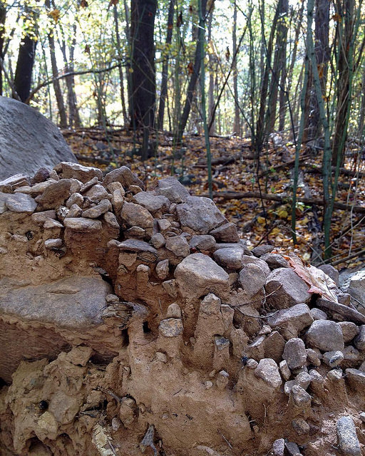close-up of eroded root ball with pebbles capping columns of dirt, with trees in background