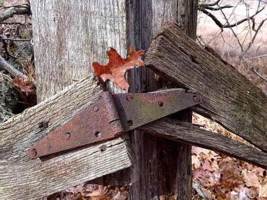 Two boards in an old fence barely held together by a rusty hinge, the gap also bridged by a fallen oak leaf.
