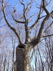 the porcupine tree