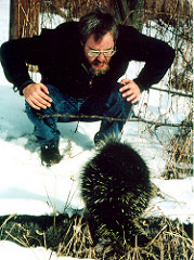 facing down a porcupine