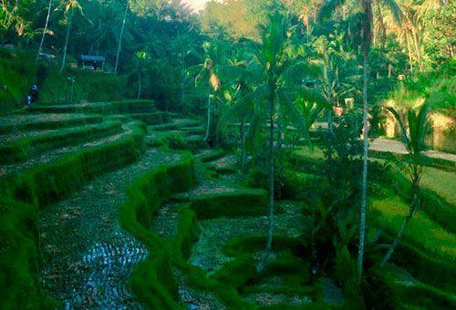 Los 11 imprescindibles de Bali