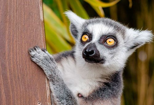 Viaje Esencias del Sur de Madagascar