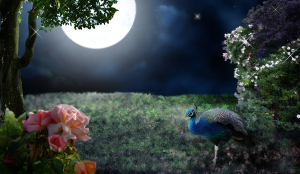 https://i2.wp.com/www.vibrakeys.com/wordpress/wp-content/uploads/2010/11/rose_bush_peacock_moon_garden1.jpg