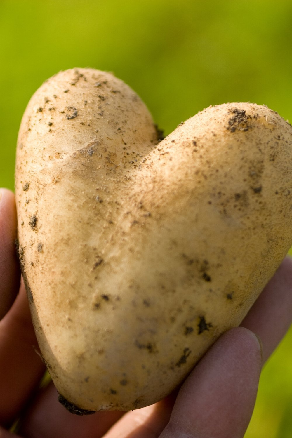 A heart-shaped potato