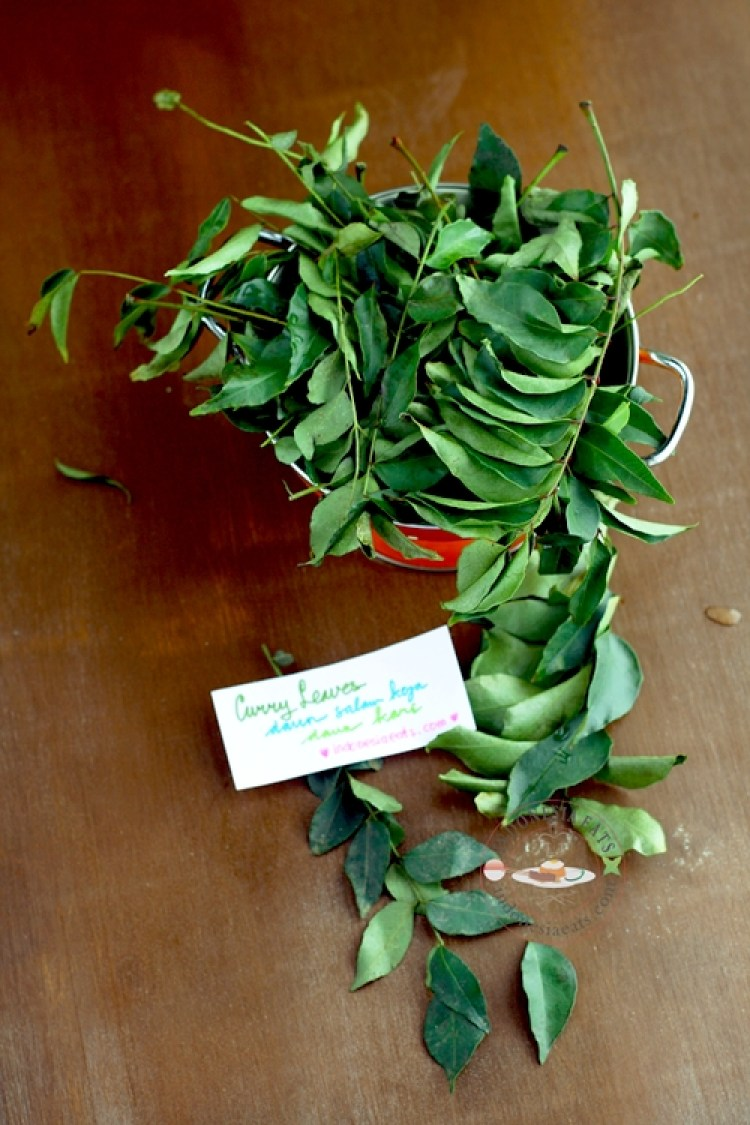Curry leaves for Maju Krueng