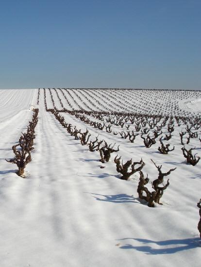 Descubrimiento vinícola. Marsilea, la bodega más fantásticamente friki