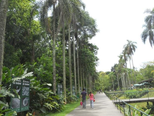 o que fazer no jardim botanico sp palmeiras