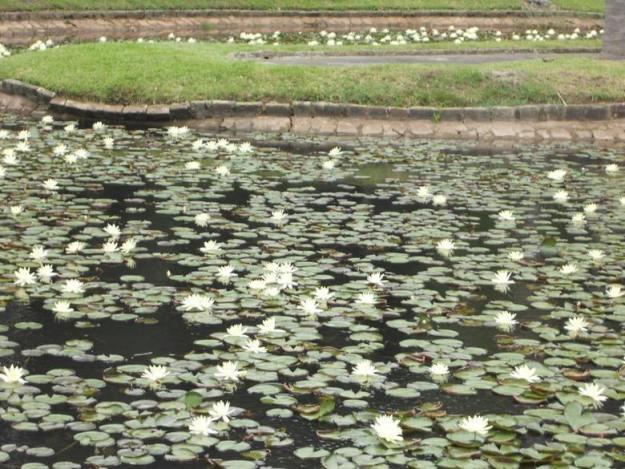 o que fazer no jardim botanico sp plantas aquaticas