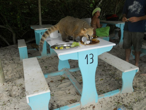 ilha-do-campeche-passeio-quati
