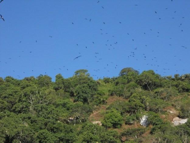 passeios de barco em ilha grande aves