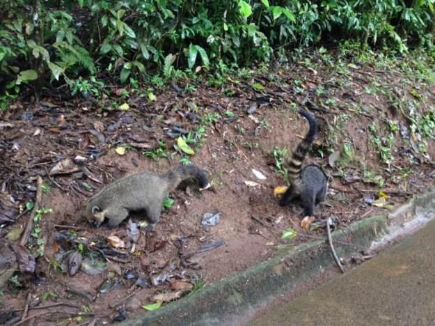 cataratas do iguacu lado brasileiro quati