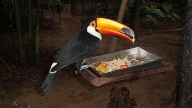roteiro foz do iguaçu parque das aves