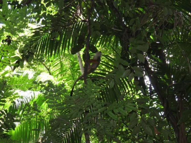 o que fazer em belem do para mico