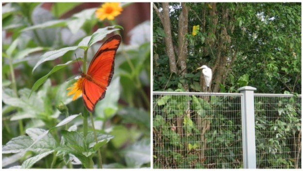 o que fazer em belem do para borboletario