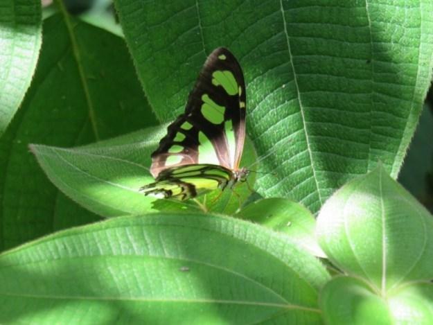 o que fazer na chapada dos guimaraes borboleta