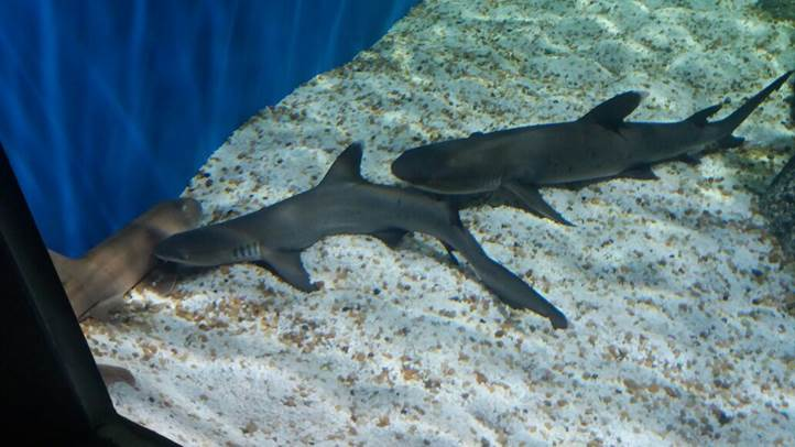 AquaRio, o aquário do Rio de Janeiro. Foto: Marcelle Ribeiro.
