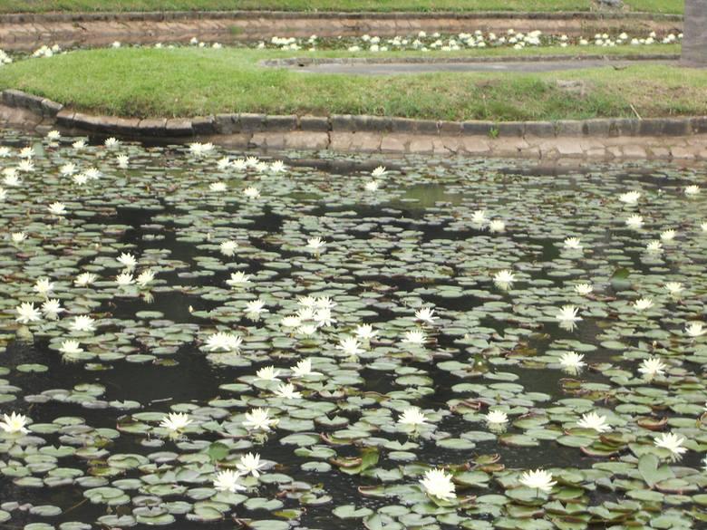 o que fazer em sp jardim botânico plantas na água