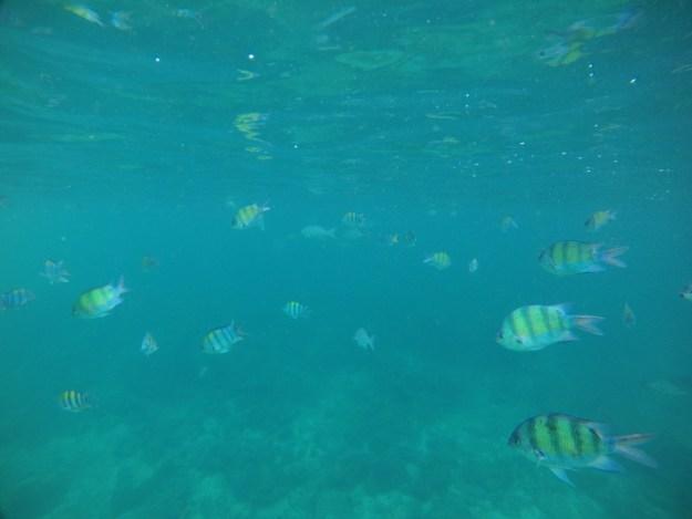 peixes mar seguro viagem tailândia