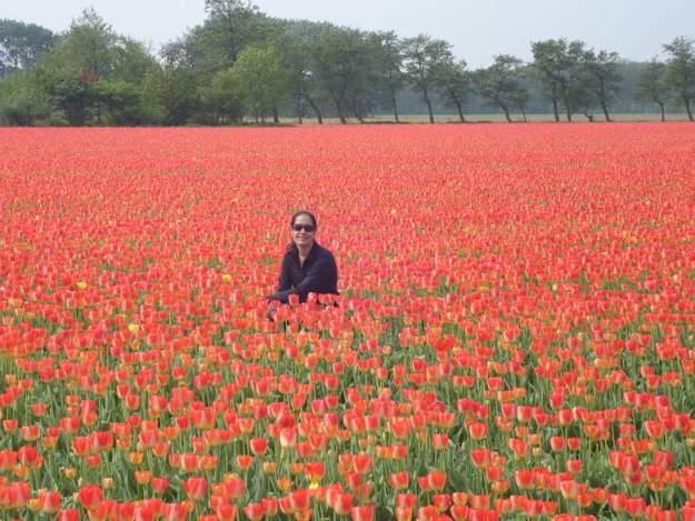 campo tulipas mulher países abertos para brasileiros