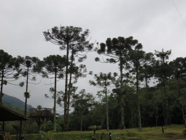o que fazer em bananal estacao ecologica