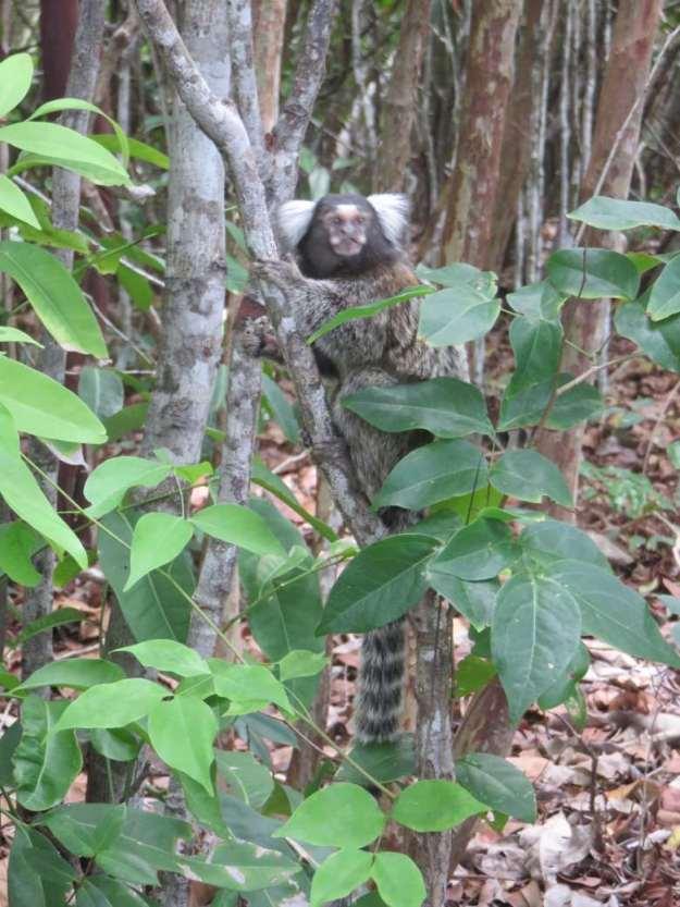 praias de pipa mico santuario ecologico de pipa