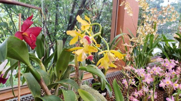 orquídea o que fazer em monte verde
