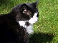 Peter's Cat, Alex
