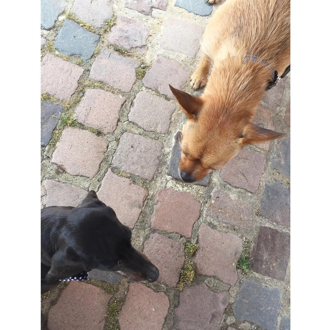 Rupert and Theo having a lunchtime bowwow in the courtyardhellip