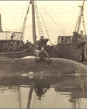 Whale carcass in the harbour