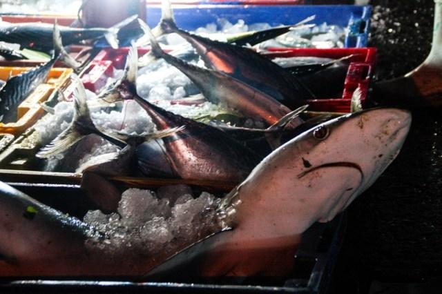Victoria Phan Thiet - Phan Thiet Fish Market - James Pham-17