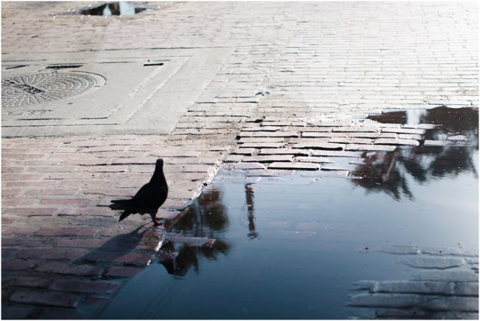 Bird reflected in a puddle at venice beach