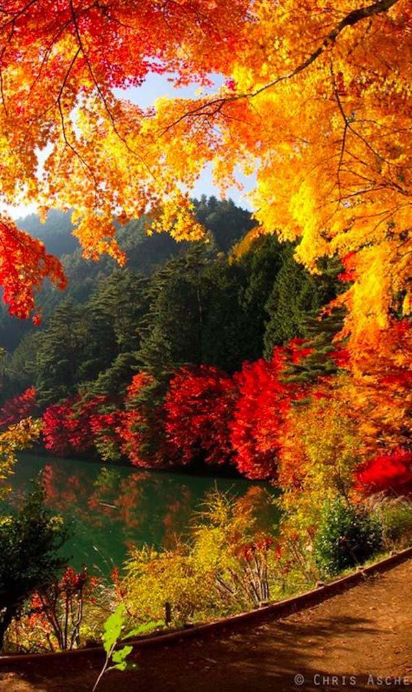 beautiful autumn foliage