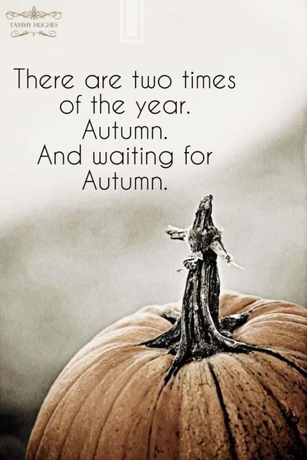 autumn pumpkin recipes