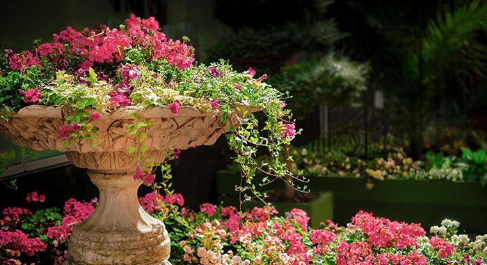 Flowers Around Water Fountain