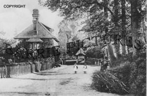 Witchampton, Village Church c1900