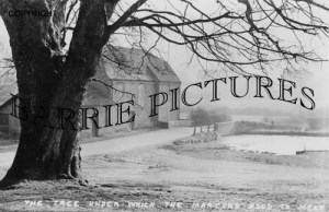 Tolpuddle, The Martyrs Tree c1900