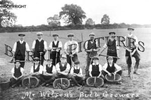 Banwell, Mr Wilsons Bulb Growers c1920