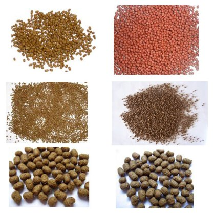 fish feed production plant video