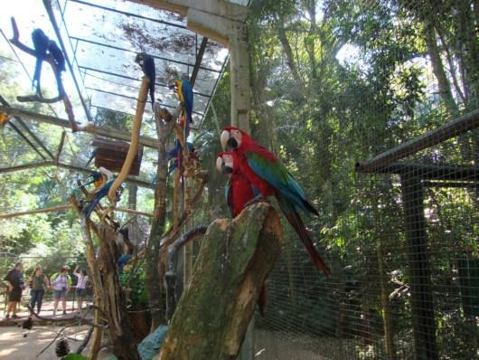 Araras - Parque das Aves