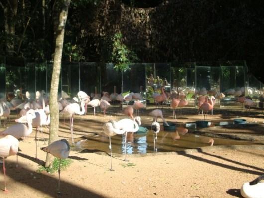 Flamingos - Parque das Aves