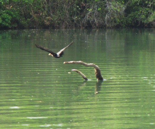 Aves em Bonito - MS