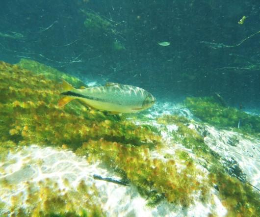 Peixes em Bonito - MS