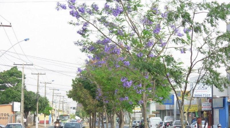 Aparecida de Goiânia - Goiás