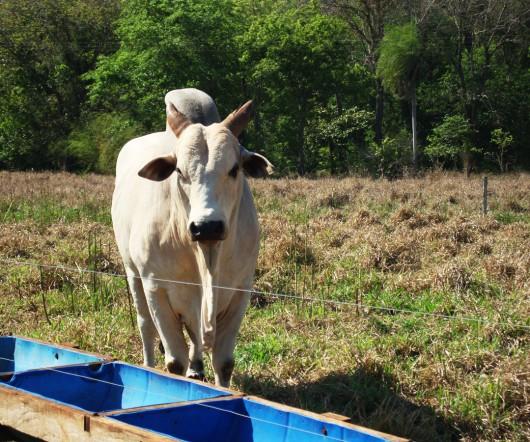 Fazenda de gado - Rio Sucuri