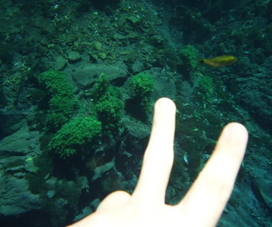 Peixe - Lagoa Misteriosa