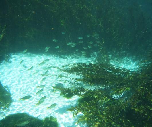 Peixes pequenos - Rio Sucuri