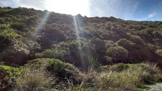 Natureza na Praia do Rosa - SC