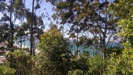 Natureza em Bombinhas
