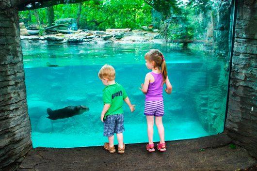 Zoológico - Dia das crianças 2018